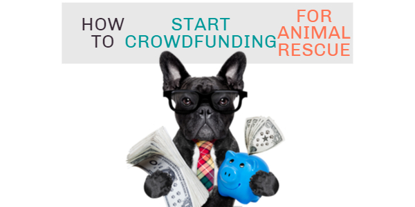 How to Start Crowdfunding for Animal Rescue?