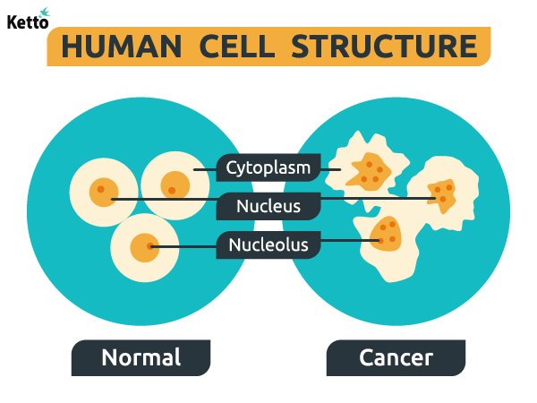 Normal and cancer cell structure