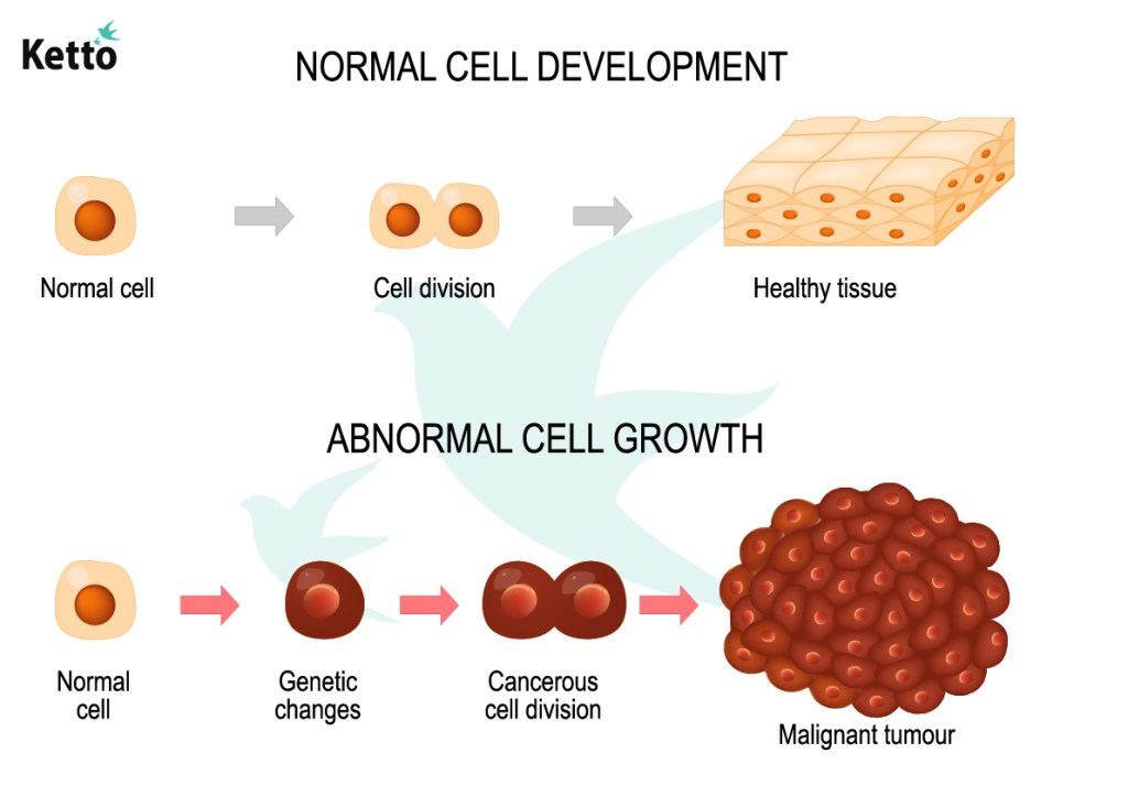 Normal and Abnormal cell development